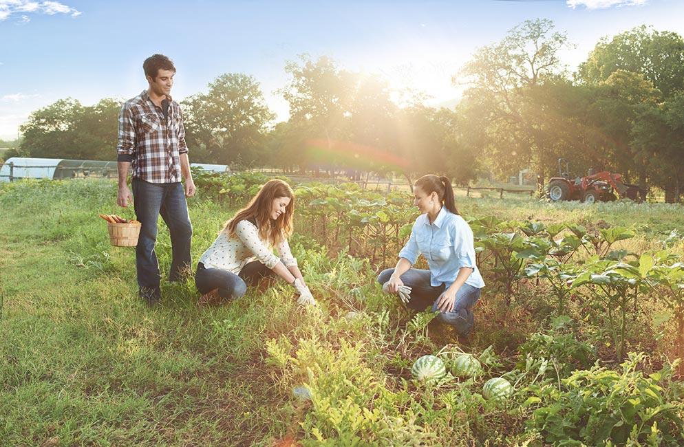 The Farm at Travaasa Austin